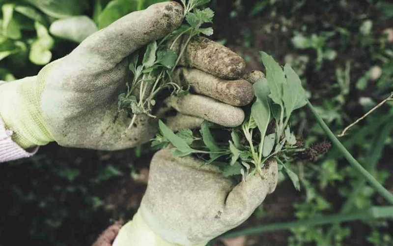 itens funcionais e de decoração para ter no seu jardim