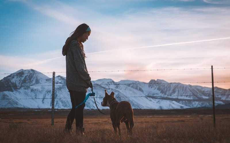 Principais tipos de coleiras e guias para cães